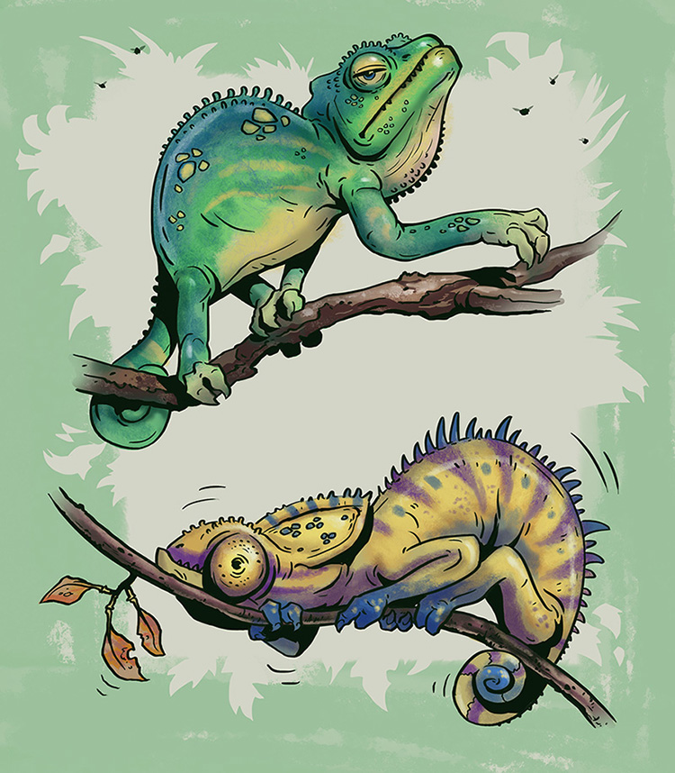 Chameleons And More Knights