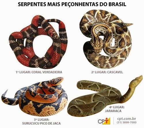 Camboriú / SC: Serpentes Peçonhentas