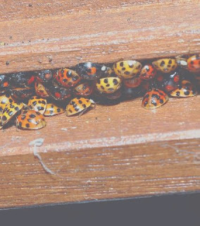buginout.com/pest-control