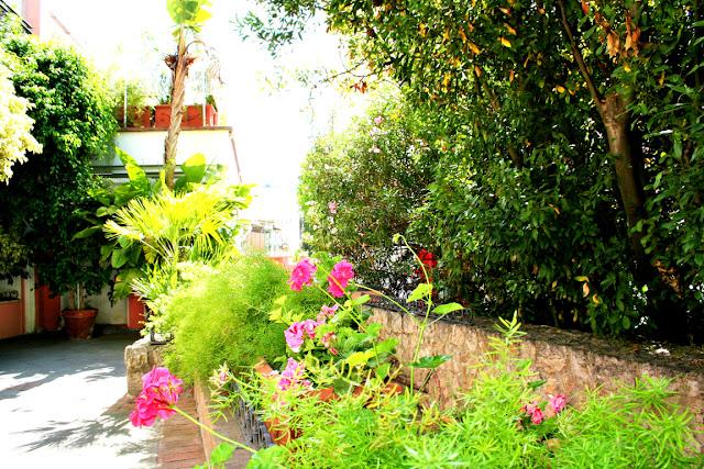 giardino, fiori, giardino di Capri