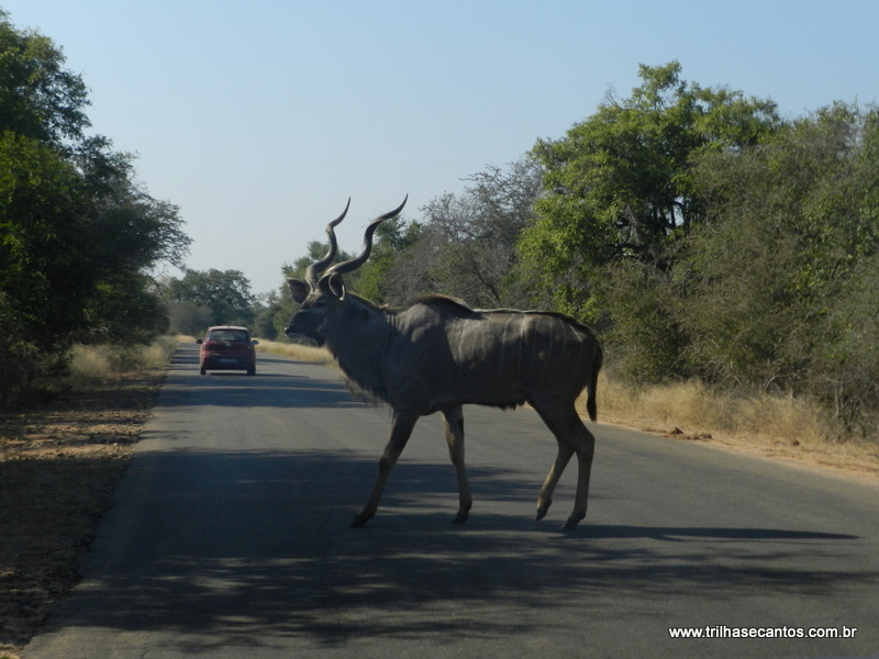 Kruger Park, Africa do Sul
