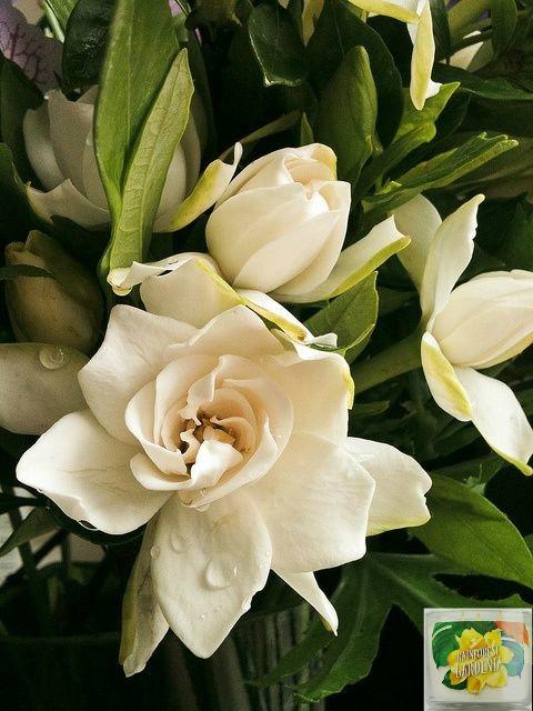 avis rainforest gardenia bath & body works, blog bougie, blog parfum, blog beauté