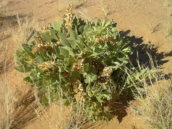 http://www.sahara-nature.com