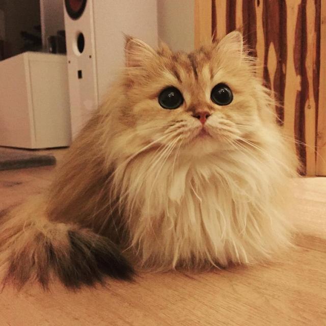 Smoothie Buat Wanita Cemburu Kerana Dia Meow Paling Fotogenik Di Dunia