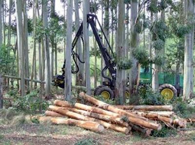 medio ambiente+tala de arboles+ecologia+tierra