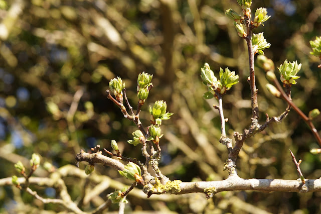 spring photography in the Norfolk countryside