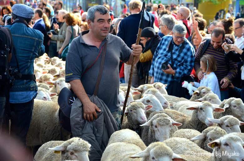 Fiesta de la Trashumancia Madrid  マドリードの旧市街を羊を連れて歩く羊飼い