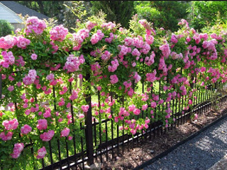 Simple Tips For Growing Beautiful Flowers in Your Flower Garden