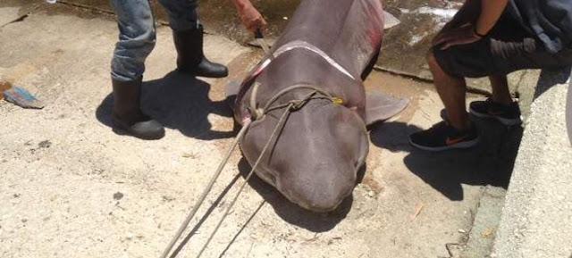 Έπιασαν καρχαρία σαπουνά τριών μέτρων στην Ιθάκη!