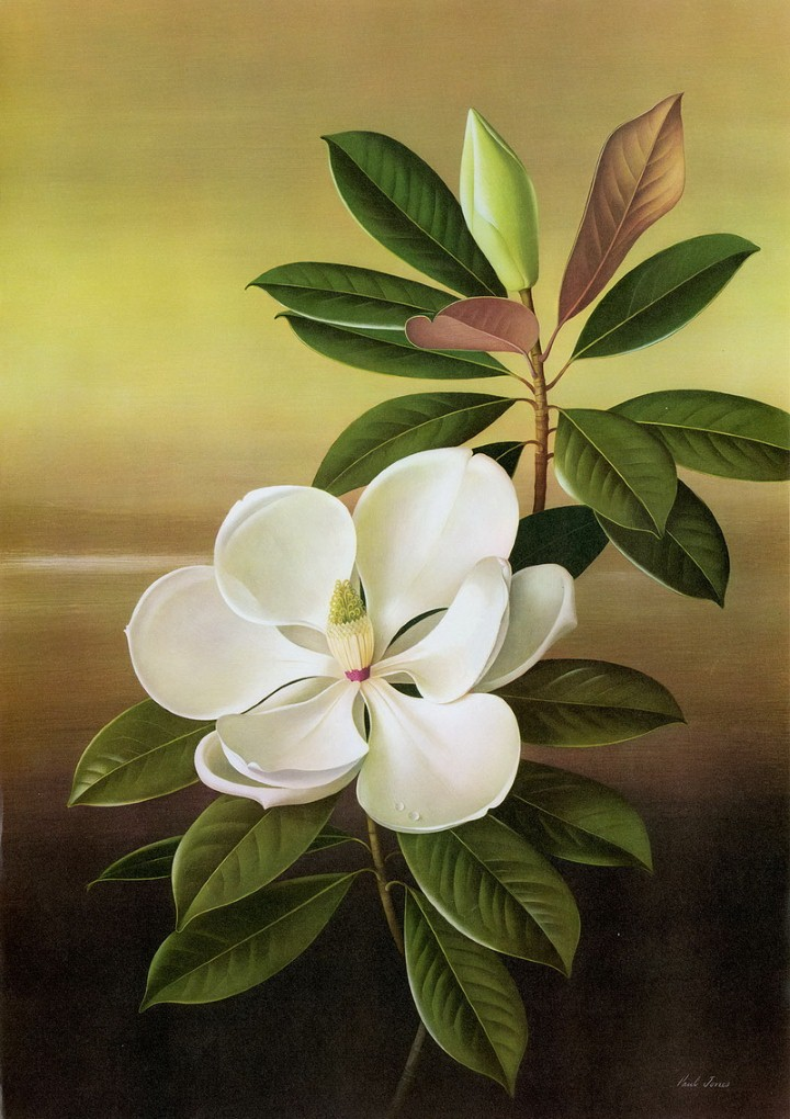 Paul Jones. Акварельные рисунки цветов 13
