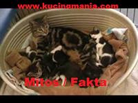 Fakta atau Mitos. Jika Kucing Melahirkan Di Rumah Akan Membawa Keberuntungan ?