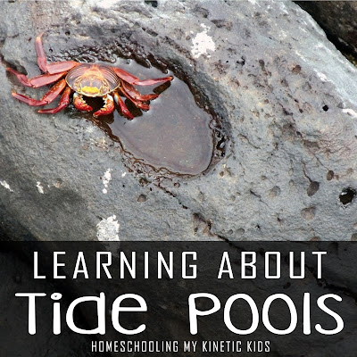 Learn about tide pools, especially the ones on the Pacific Coast with these fun books, toys, and educational activities.