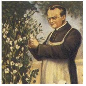 Tìm hiểu về Gregor Mendel