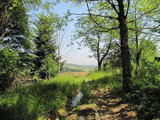 Zejście z Kamienia do doliny dawnej wsi Przybyszów. W dali widać zbocze pasma Bukowicy.