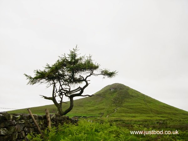 Roseberry Topping Tree