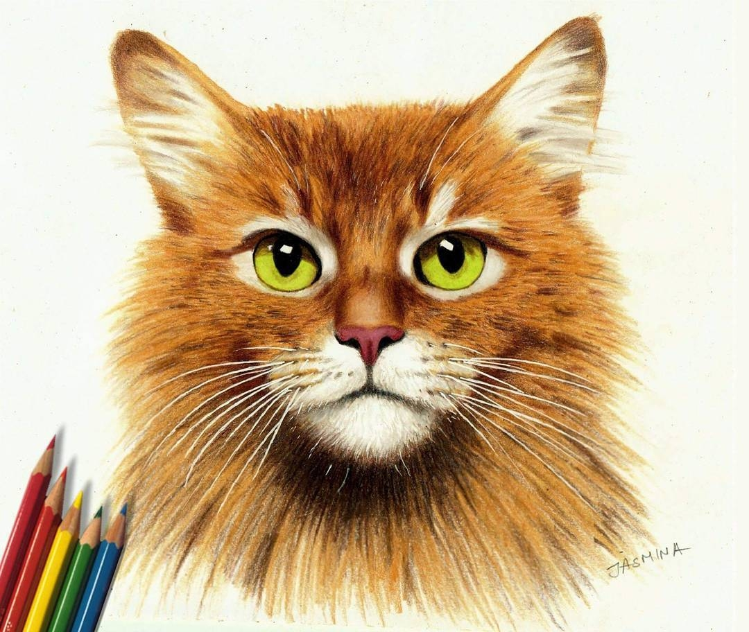 09-Ginger-Cat-Jasmina-Susak-Realistic-Animal-Drawings-with-Colored-Pencils-www-designstack-co