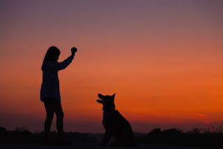 A woman playing with a dog against the sunset
