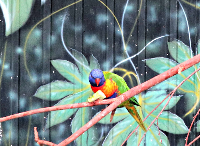 A colourful Lorikeet at Paradise Wildlife Park