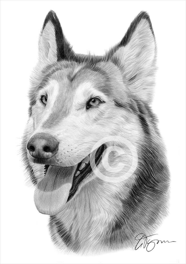 06-Wolf-Gary-Tymon-Wildlife-and-Domestic-Animal-Pencil-Drawings-www-designstack-co