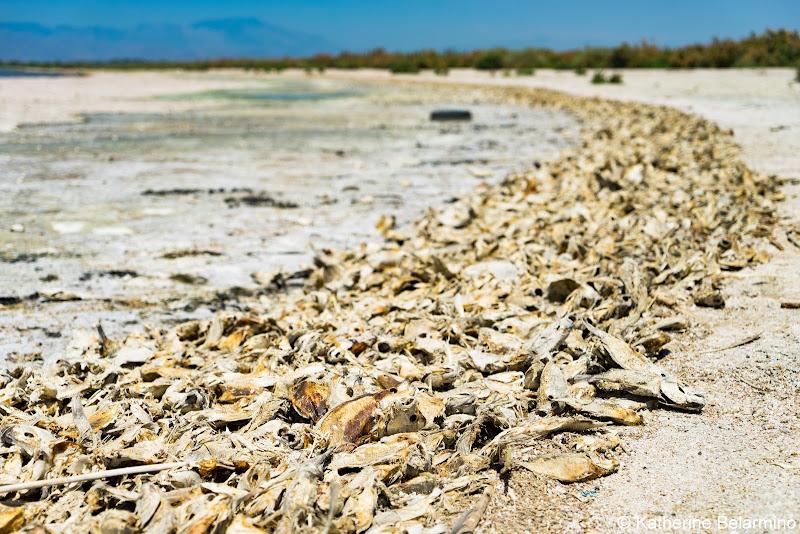 Dead Tilapia Salton Sea Ghost Towns Photography