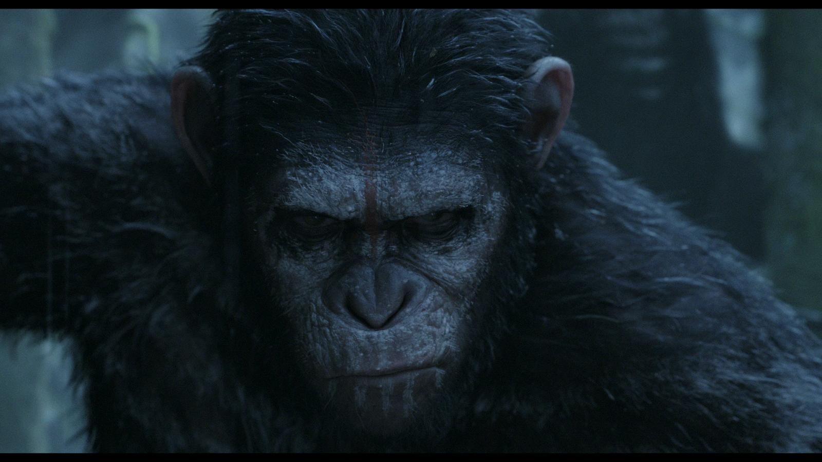 El Planeta De Los Simios Confrontación (2014) 1080p 2D y 3D BD25 6