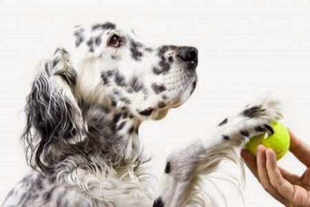 cachorro educado