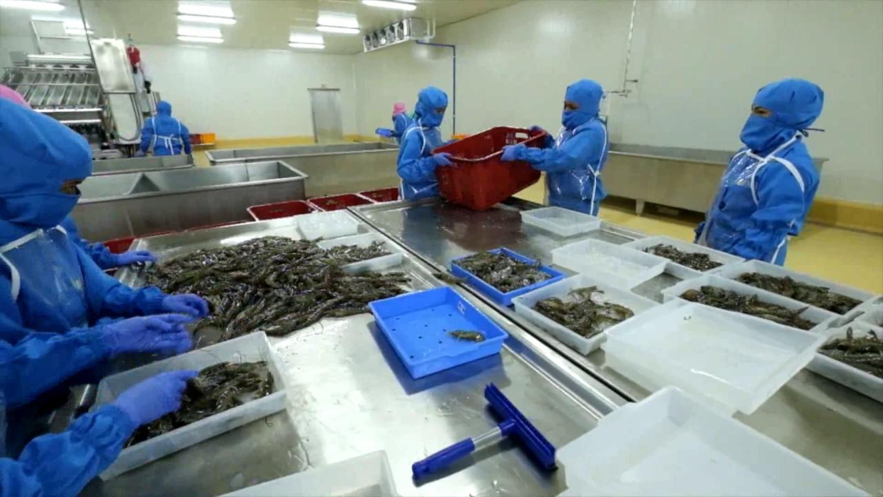 Understand Frozen Shrimp Factory Processing Step by Step - Frozen