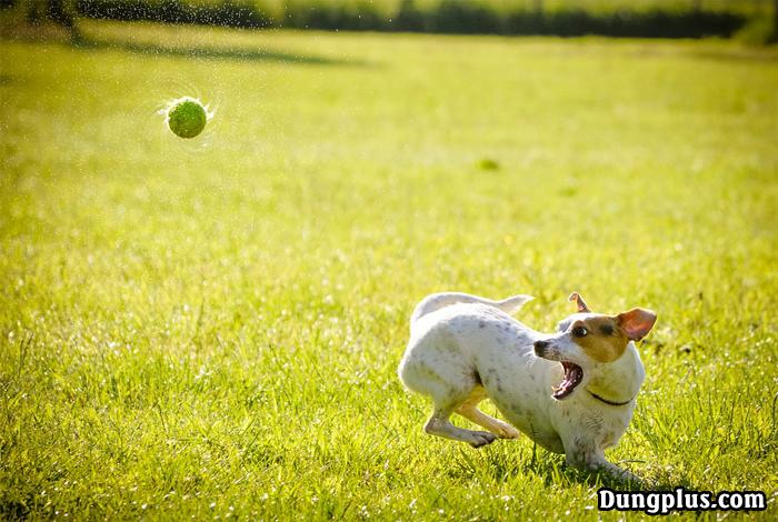 con chó chơi đùa với quả bóng