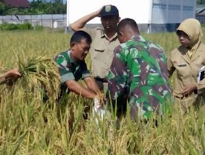 Kementerian Pertanian Usul 7 ribu PPL Pertanian diangkat CPNS