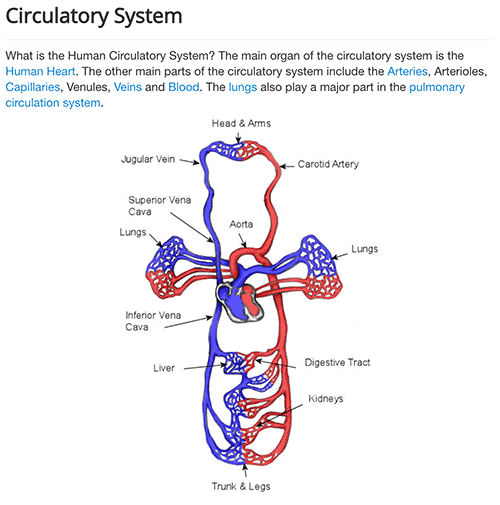 Circulatory system and its functions