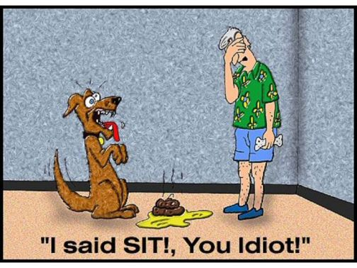 Funny Dog Cartoon - I said SIT! You Idiot!