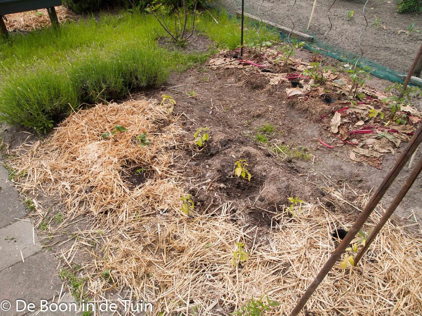 mulch mulchen bedekken bodem moestuin volkstuin