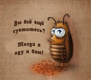 Чего боятся тараканы? Рекомендации и советы, Праздничный мир