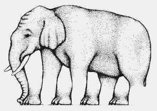 Awesome Illusions That May Make Your Brain Explode - How many legs does this elephant have? Are you sure?