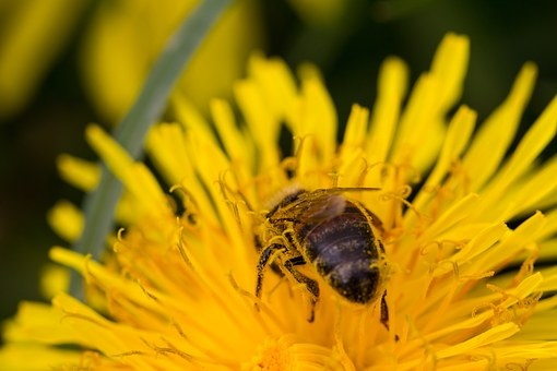 ABEJAS SOBRE AMARILLO - BEES ON YELLOW.