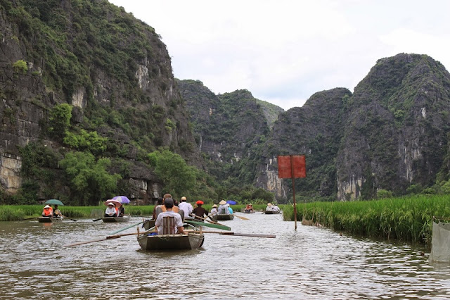 Surprised by the picturesque rice fields look like pictures in Tam Coc 5