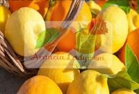 Logo Vinci gratuitamente 250 gr di paste di mandorla e fornitura di agrumi