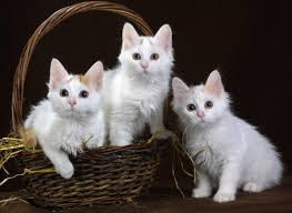 Hayvan Sevgisi, Çocukluk, Masallar,