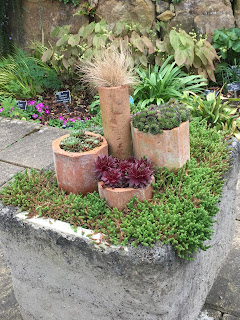 Alpines planted in recycled teracotta pipes