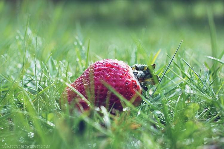 truskawka, truskawki, strawberry, owoce, fotografia owoców, bokeh, canon 50mm 1.4