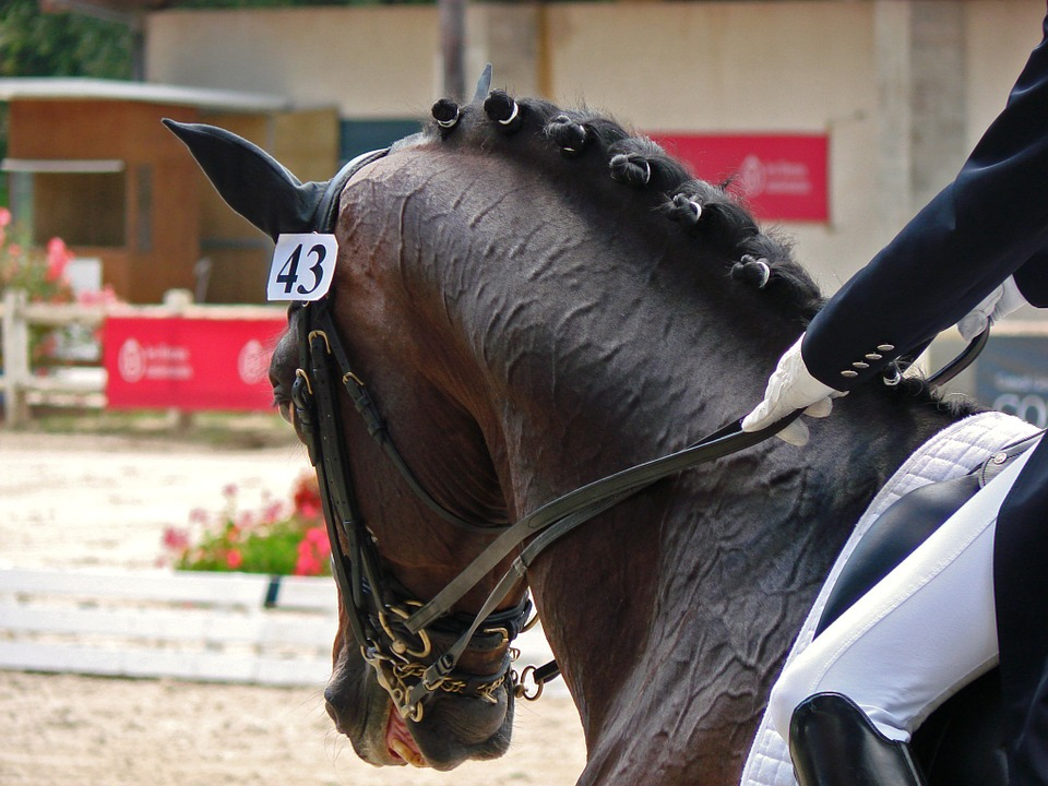 Evaluating Conformation of  a Dressage Prospect