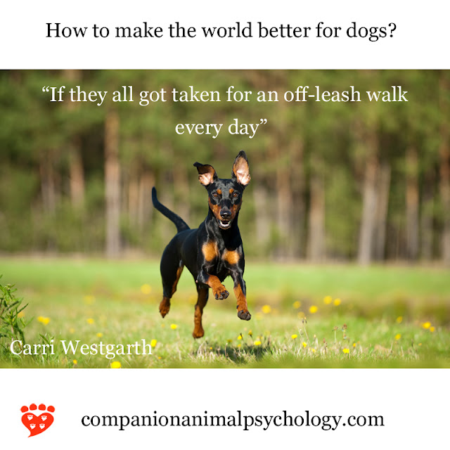 A better world for dogs - off-leash walks every day