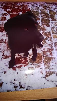 Poster mit Schwarzen Labrador Hund Angel