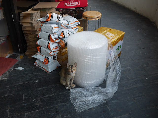 cat sitting next to a large roll of bubble wrap