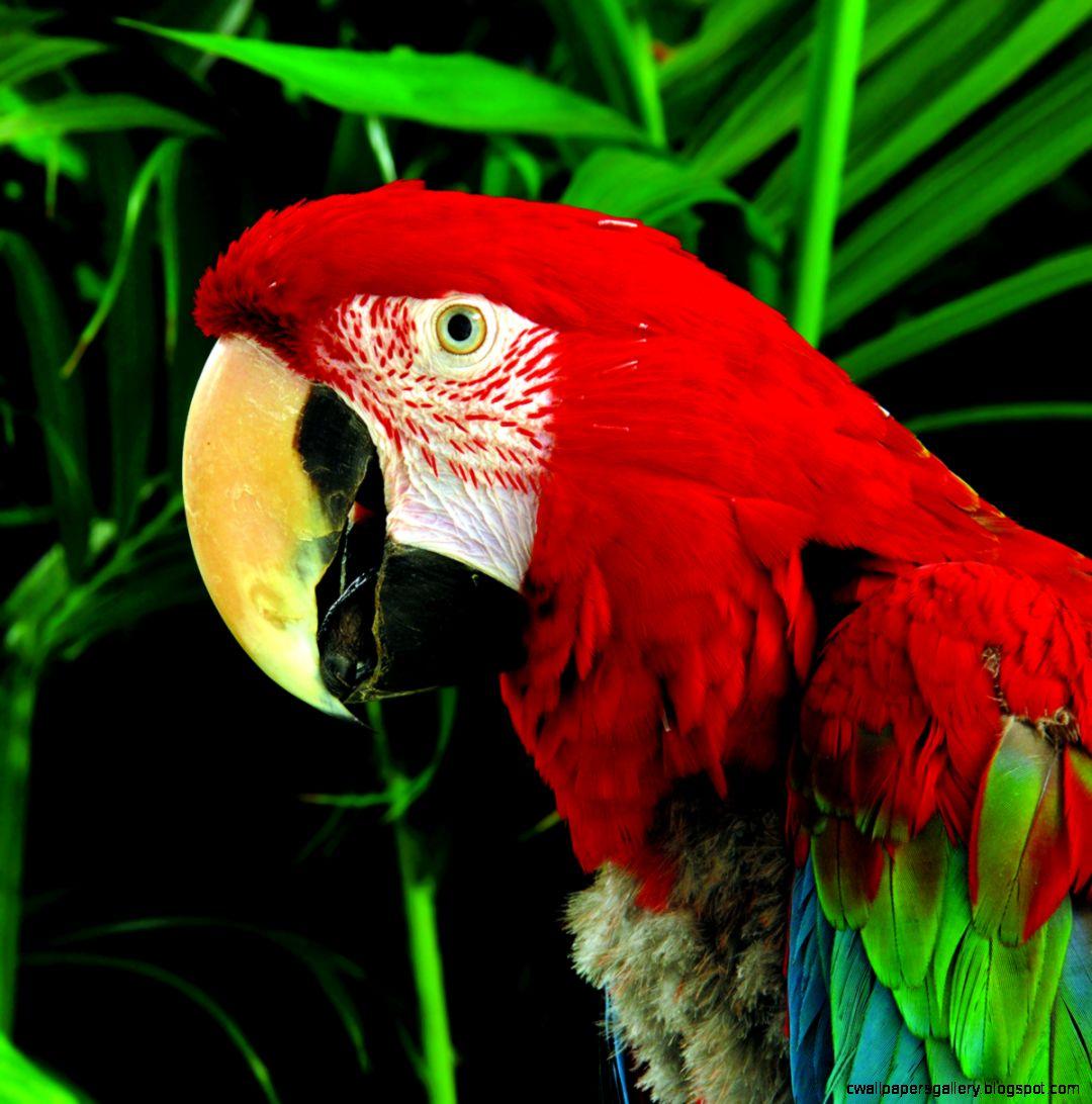 Rainforest Animals And Plants List