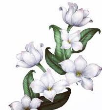 gambar bunga melati 3D