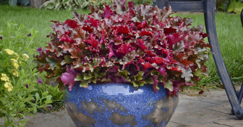 5 Best Plants For Container Gardening - My Favorite Things