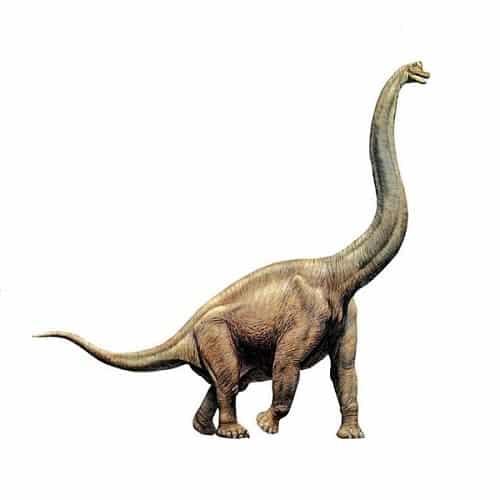 Clasificacion De Los Dinosaurios Segun Su Alimentacion Los herrerasaurus fueron dinosaurios de pequeño y mediano tamaño que vivieron casi por todo el eran hervivoros bípedos pudiendo ser también cuadrupedos, había de todos los tamaños, desde. clasificacion de los dinosaurios segun