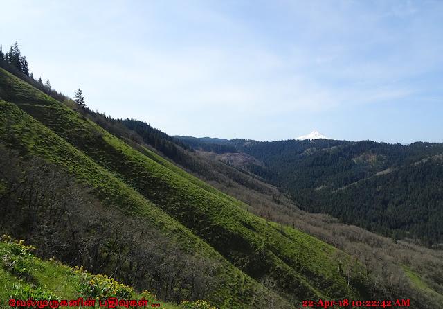 White Salmon Oak NRCA WA
