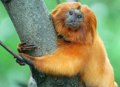 rwanda gorilla and golden monkey trekking, rwanda primates tour, 5 days rwanda, 5days rwanda primates